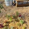 堆肥作り・・・堆肥枠作成
