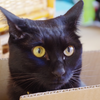 今日の黒猫モモ&白黒猫ナナの動画ー803
