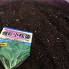 ベランダで小松菜を育ててみる。