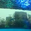 サンシャイン水族館を子連れで楽しむベストコース