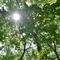 雑木林を散歩してみたら人以外にはコロナなんて関係なく力強い姿にあふれていた