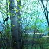 新緑の 窓辺に ヒヨドリ