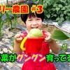 <UP>ファミリー農園#3 野菜たちがグングン育ってる!