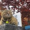 谷中銀座周辺で猫を探してきた結果|いそうでいないがどこかには居る猫