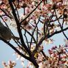 春は、お花を求めて・・・ byつじまい