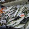 舞鶴かね和 京都舞鶴市  海鮮市場  海鮮販売  干物販売  鮮魚販売  お土産