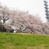【大宮】大宮第二公園【さいたま市で大人のお花見が楽しめるのはココ】
