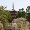 五重塔 醍醐寺