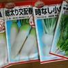 ダイコンとホウレンソウを蒔きました。畑の様子。