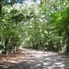 糺の森と下鴨神社(京都まち歩き#13)