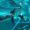 【オーストラリア】ダーウィン旅行記③ 3日目 クロコザウルス・コーブ、ウェーブラグーン