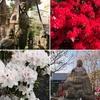 寺町の朝景色 いろどり鮮やかな絵画の季節