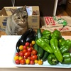 夏野菜の頂き物続く 〜買わなくてよかったww 〜