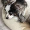 犬の腎臓病を知るための検査