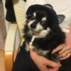 実家で飼っていた愛犬が亡くなった。安らかに。