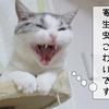猫の病気 ~外部寄生虫~