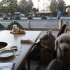 犬と一緒に食べれる焼き肉店 うしすけ