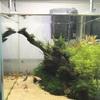 アクロ30cmキューブ水槽スーパークリアを購入し、水草レイアウトを作りました!