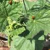 【家庭菜園は土づくりが肝心!】肥料の種類と失敗しないコツをまとめました