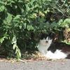 10月23日 谷中界隈の猫さま と谷中ビアホールの情景ほか