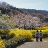 【花の福島2021】福島の桃源郷・花見山を歩いてきました!