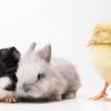 獣医学部を目指す受験生必見。獣医学部が抱える問題を知っていますか?