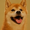【厳選】商用利用可の柴犬画像20枚集めてみた!!!