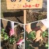 農園  おりーぶファーム👨🌾 農作業訓練です!  放課後デイ各事業もおりーぶファームで、農作業体験を実施します👩🌾 http://www.olive-jp.co