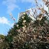 江戸城の穴
