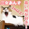 猫って高い所好きだよね!特に三女'あんず'は高い所大好き!【猫3姉妹】