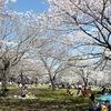 平塚総合公園 平塚市総合公園はたくさんのスポーツ施設が盛り沢山の公園です