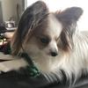 犬の耳の動き