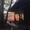 殿ヶ谷戸庭園 in 立冬