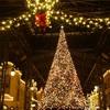 冬の東京ディズニーリゾートで幻想的な写真を撮る方法をご紹介!素敵なクリスマスの演出や思い出作りに