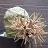 イソギンチャクみたいな花