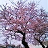 3月30日 お花見