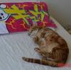 猫も歓喜!台風一過で今日は猛暑!?クーラーはつけっぱなしの方が安い?
