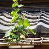 6月の慈雲寺