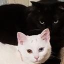 猫とDIYと適応障害の私