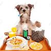 犬のインフルエンザ