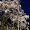 龍源院の枝垂れ桜 【境内に幽玄に佇む枝垂れ桜】