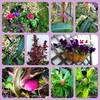 2月『つる植物の園 管理カレンダー』