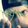 若者に流行『大麻(マリファナ)』とは何か??