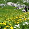 お花真っ盛りの木曽駒ヶ岳 byつじまい