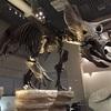 国立科学博物館は子どもに1回見せても損は無い