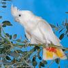 【パラワン島】台風接近中に突然現れた絶滅危惧種の白いオウムの群れ