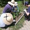 花壇に種まき、苗植え ブルーベリー摘み取り ノカンゾウの花