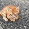 茶トラの子猫を保護。3年連続で子猫保育園を開園します!!