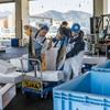 2017年4月24日 小浜漁港 お魚情報
