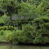 季節によって様々な景色が撮れそう 三渓園